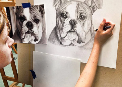 bulldog-drawing